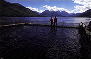 Fish farm in loch Scottish Quality Salmon
