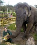Asian elephant in zoo BBC