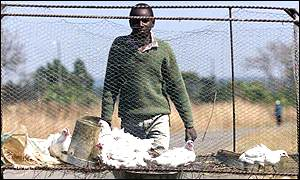 A man takes chickens to market