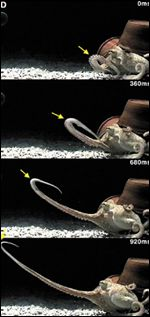 Octopus arm sequence, Science