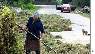 An elderly villager dries hay on an asphalt road near Smilovichi, Belarus