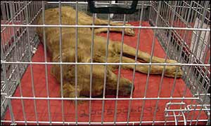Woody sleeping in cage at the centre