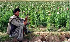 Three quarters of the world's opium is produced in Afghanistan from poppy fields cultivated by farmers