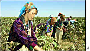 Uzbek cotton pickers