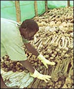 the rwanda genocide and the inaction of the united nations and the united states of america United nations — secretary general boutros boutros-ghali, bristling with anger and frustration, derided the international community wednesday for talking but doing little else to stop genocide in rwanda.