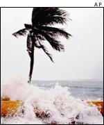 Palm tree in hurricane   AP