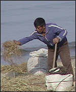 Man trying to retrieve damaged crops