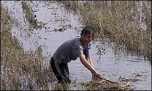 Boy in a flooded paddy field