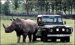 A white rhino stands next to a Land Rover