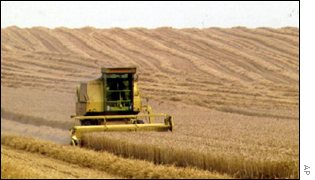 combine in wheatfield