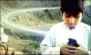Afghan boy with pet bird