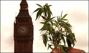 Cannabis in front of parliament