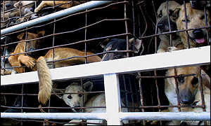 Caged dogs in Vietnam