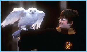 Owls like Hedwig could be popular at Christmas