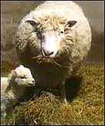 [ image: Dolly the Sheep: First cloned mammal]