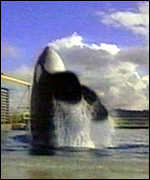 [ image: The Free Willy Keiko foundation initiated the whale's freedom bid]