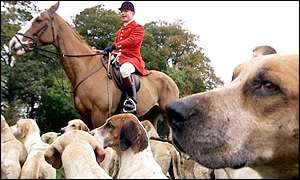 Hunt member and hounds
