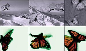 Daniel Brown's Butterflies - his aim is to make the user forget the technology when they look at the image