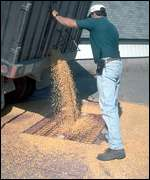 Lorry tips beans   Monsanto