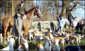 Horse and hounds at the Hunt