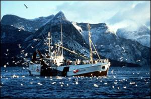 Norwegian trawler and gulls   BBC