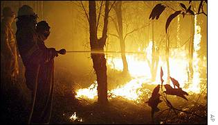 A fire fighter sprays water on the flames in the suburb near Sydney