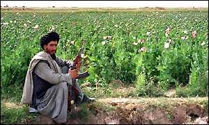 Poppy field in Afghanistan