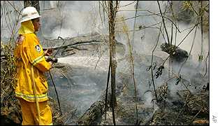 A fireman hoses down trees in the northern suburbs of Sydney