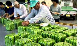 Japanese farmers process the square watermelon - designed to allow for easier storage