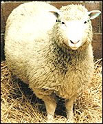 Dolly the sheep (Press Association)