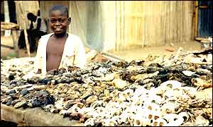 Boy selling voodoo fetishes in Togo