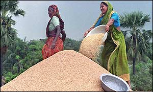 Women winnowing rice