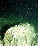 Corroded nuclear waste barrel on seabed   Greenpeace/Newman
