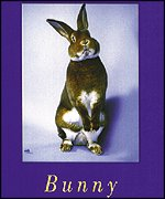 Cover of Bunny
