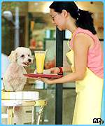 A pet is brought its meal at the Urban Pooch restaurant