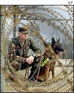 A US soldier and an attack dog in Guantanamo Bay