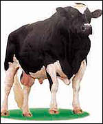 Donor: A prize bull, RAB