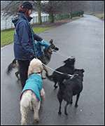 Dog Walking Jobs Leeds