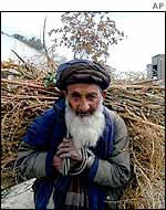 Kabul man carrying firewood