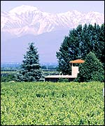 La Agricola winery, in the background the Andes