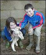 Quinney children play with lambs