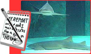 A Nurse shark lies on the bottom of the tank
