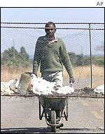 A farmer taking chickens to market
