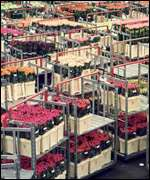 Reproduced with acknowledgement to Flower Auction Aalsmeer