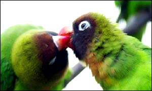 Love birds at the Brent Lodge Park Animal Centre, Hanwell, West London