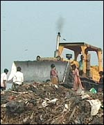 Scavengers following bulldozer at a tip