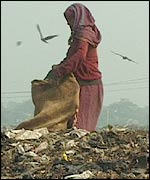 Woman gleaning garbage