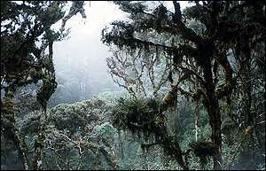 Cloud forest in mist   WRI
