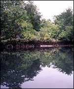 Mangrove forest   WRI