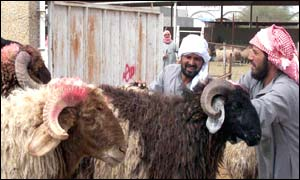 Saudi men deliver sheep to the meat market in Riyadh